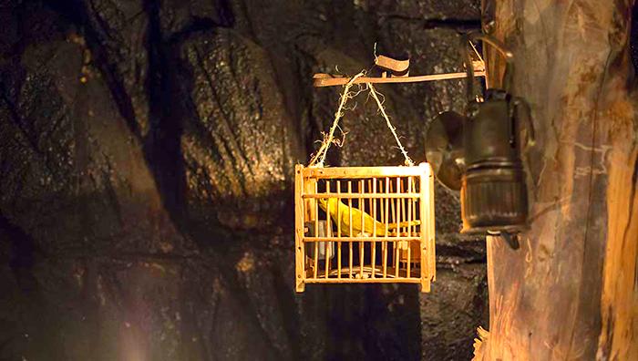 Canari au fond de la mine de charbon Kusama
